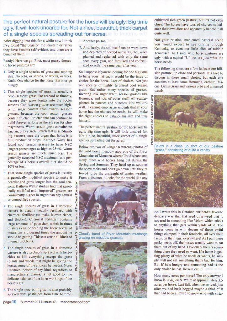 High desert horses5