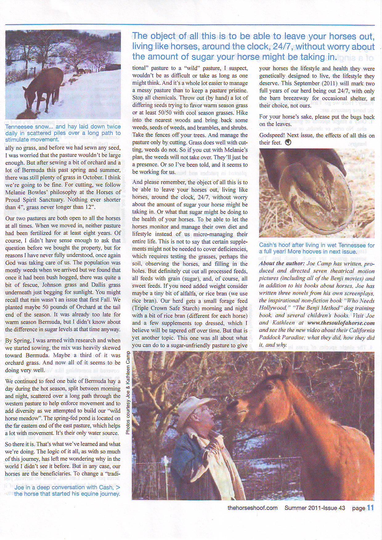 High desert horses6