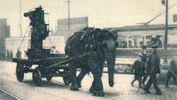 Ww1-elephant2