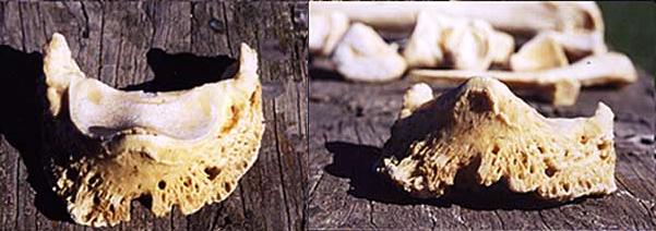 osso 1
