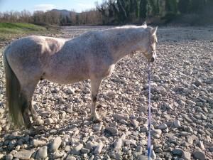 il posto ideale … esiste. Il cavallo di Leonardo Consalvi a paseggio in un greto. Ideale da recintare con pezzetti di rive stagionalmente.