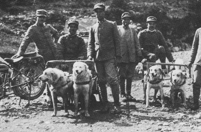 Cani da traino italiani